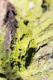 与绿色青苔的抽象构成在树皮 免版税库存照片