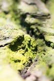 与绿色青苔的抽象构成在树皮 库存照片