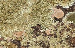 与绿色青苔的抽象背景在石头 免版税图库摄影