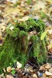 与绿色青苔的树桩在森林里 免版税库存图片