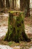 与绿色青苔的老木树桩 免版税库存图片
