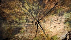 与绿色青苔的老树桩在春天 免版税图库摄影