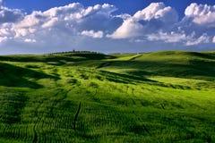 与绿色领域的托斯卡纳著名柏树和日落点燃 免版税图库摄影