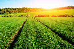 与绿色领域,拖拉机踪影的早晨风景在太阳的发出光线 库存图片