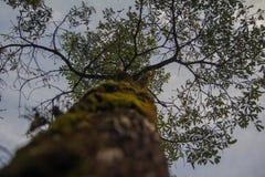 与绿色mos的大树 库存照片