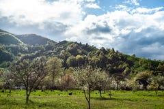 与绿草、小山和树,晴朗的天气,多云天空的风景 免版税库存照片