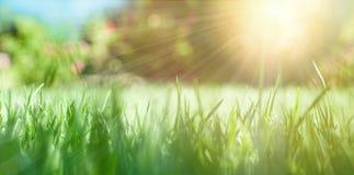 与绿草和太阳的自然背景 免版税库存图片