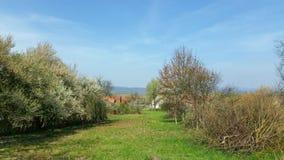 与绿草和白色庭园花木的领域在河附近 免版税库存图片