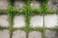 与绿草的具体块纹理背景的 免版税库存图片