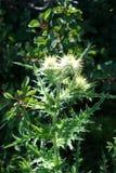 与绿草的白色植物群 免版税库存图片