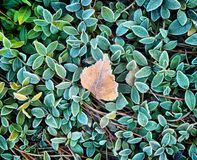 与绿草的秋天背景在树冰和一片死的叶子 免版税库存照片