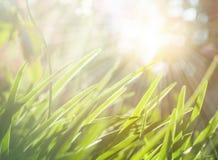 与绿草草甸的春天或夏天抽象自然背景 免版税库存照片