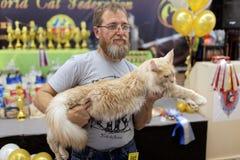 与缅因树狸猫的所有者 免版税库存照片