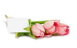 与缎丝带和明信片的桃红色郁金香 免版税库存照片