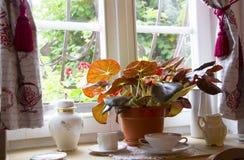 与罐和植物的窗口 免版税图库摄影