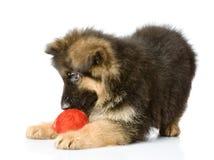 与羊毛球的小狗戏剧。 免版税图库摄影
