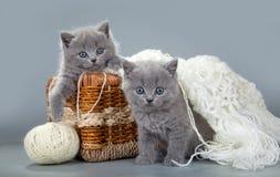 与羊毛球的英国小猫在篮子的 免版税库存照片