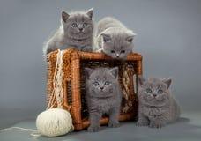 与羊毛球的英国小猫在篮子的 图库摄影