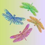 与美丽五颜六色的翼的蜻蜓 免版税库存照片