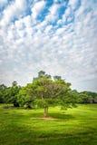 与美丽的天空的一棵树 免版税库存图片