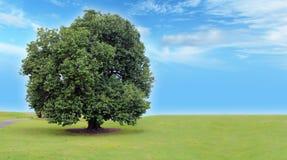 与美丽的天空的树 库存图片