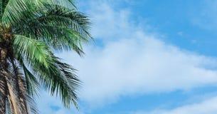 与美丽的天空的椰子树和明亮 库存图片