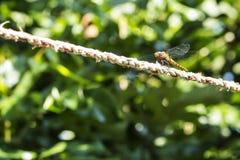 与美丽的昆虫的蜻蜓 免版税库存照片