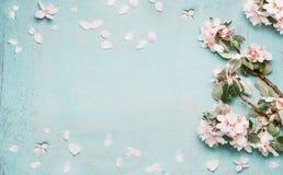 与美丽的春天开花的春天背景在淡色,顶视图 免版税库存照片