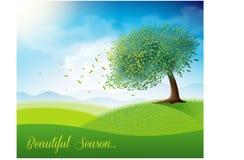 与美丽的树的绿色领域 免版税库存照片
