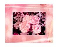 与美丽的桃红色玫瑰花束的老葡萄酒卡片在白色的 免版税库存图片