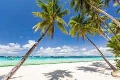 与美丽的棕榈和白色沙子的热带海滩 免版税库存图片