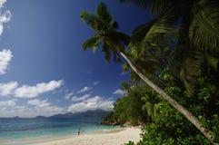 与美丽的棕榈树,塞舌尔群岛的Anse Soleil 免版税库存照片