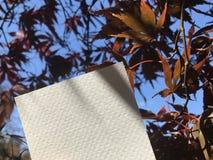 与美丽的槭树叶子和好的蓝天的空白的白皮书在背景 图库摄影