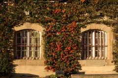 与美丽的橙色花的石窗口 免版税库存照片