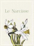 与美丽的水仙的浪漫卡片 免版税库存图片