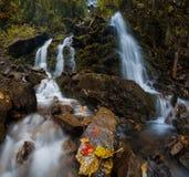 与美丽的瀑布的五颜六色的有薄雾的秋天风景在山河在有红色和黄色叶子的森林里 免版税库存图片