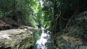 与美丽的热带雨林风景 影视素材