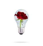 与美丽的玫瑰色花的电灯泡。 库存图片
