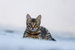 与美丽的眼睛的小猫 库存图片