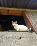 与美丽的眼睛的猫 免版税库存照片