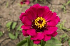 与美丽的红色花的背景 免版税库存图片