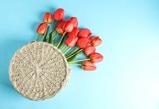 与美丽的红色郁金香的被编织的袋子在蓝色背景 免版税库存图片