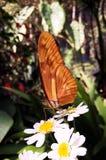 与美丽的翼的大橙色蝴蝶在一个热带花园里 免版税库存图片