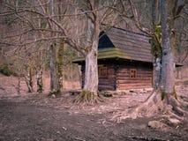 与美丽的老树的山小屋 图库摄影