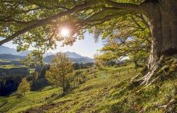 与美丽的色的山毛榉树的金黄10月 库存照片