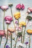 与美丽的花和瓣的花平的位置,在葡萄酒绿松石背景 免版税库存照片