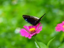 与美丽的花的蝴蝶 库存图片