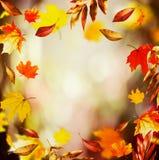 与美丽的落的叶子的秋天背景和bokeh,秋天自然在庭院里 库存照片