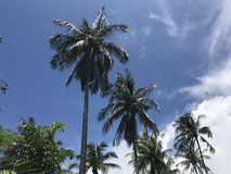 与美丽的蓝天的椰子树 图库摄影