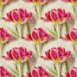与美丽的郁金香花的无缝的样式 背景花卉无缝 免版税库存照片